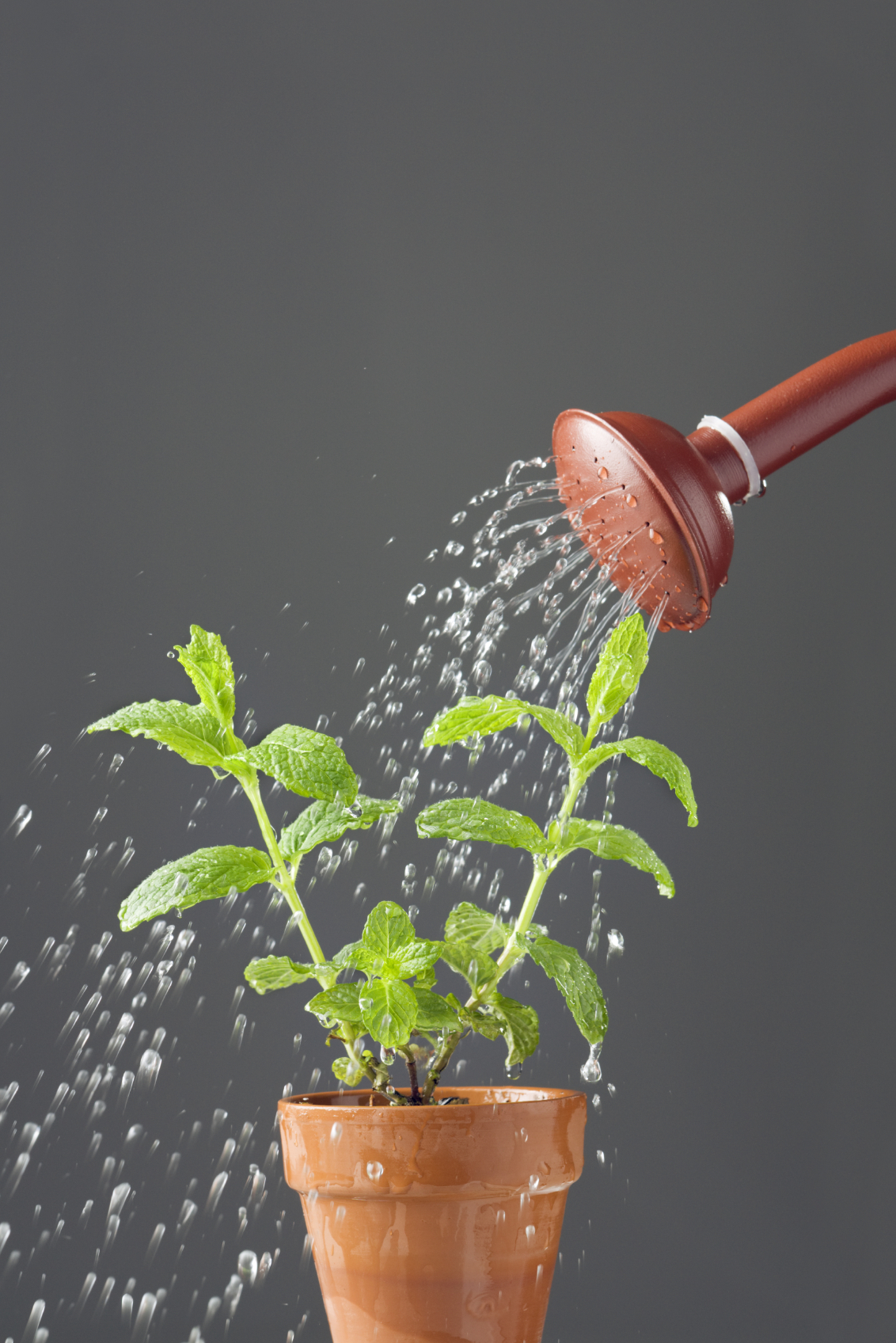 Four strategies for becoming powerfully relevant to your for Plant waterer