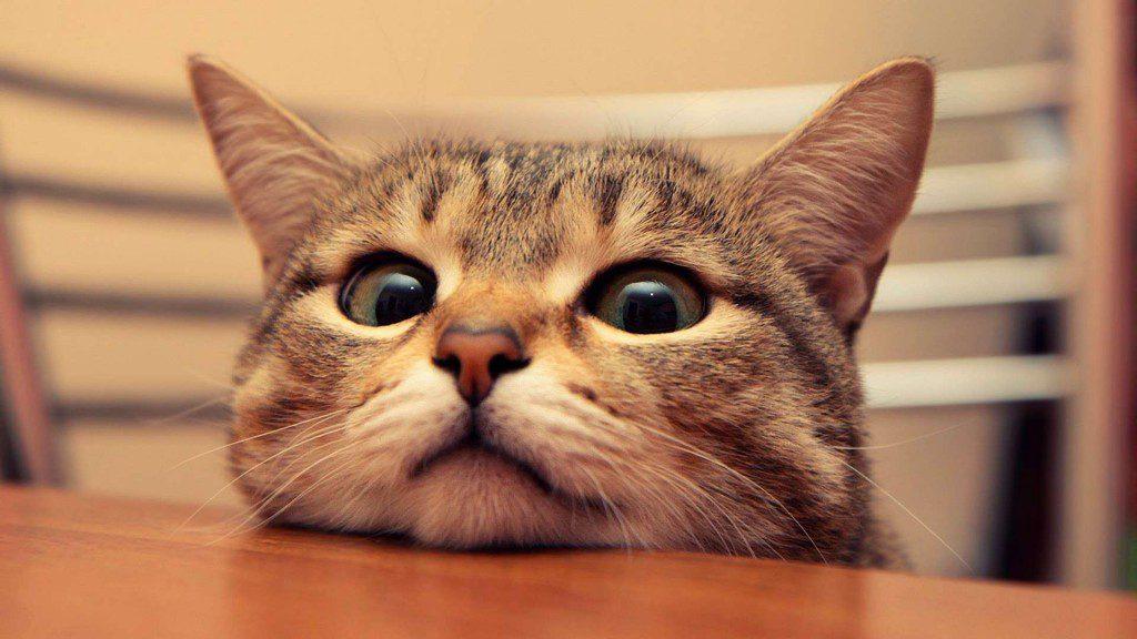 Animals___Cats_curious_Cat_043848_